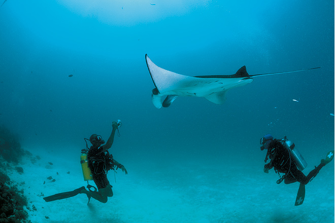 the maldive shark essay Diving in the maldives quick facts the coconut palm and the yellow-fin tuna, symbols of the maldives, say a great deal about this nation of more than a thousand islands.