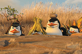 Meet the Penguins of Madagascar in New Zealand