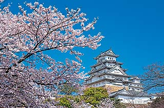Himeji Castle: Japan's first Unesco heritage site reopens for public