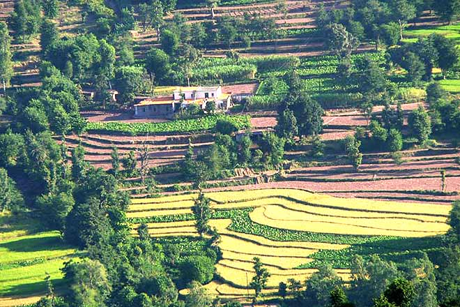 Kasauli's farmlands