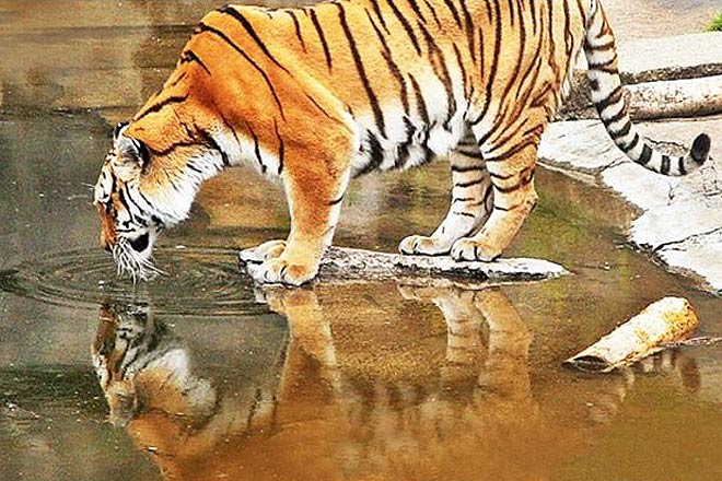 list of tiger reserves in india pdf