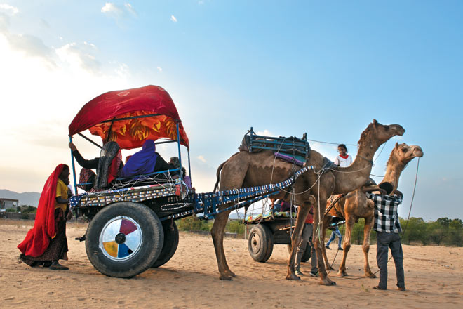 Camel safari at Pushkar