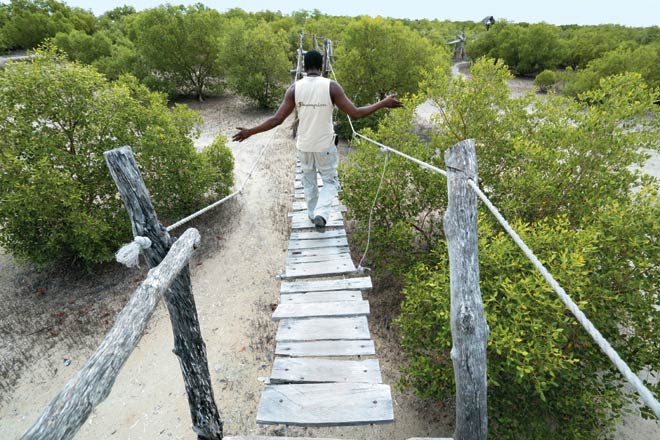 The boardwalk in the mangrove forest at Mida Creek is quite rickety