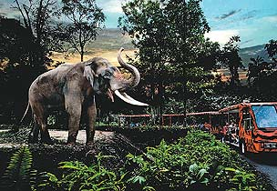 Singapore: Wildlife Packages For Indians