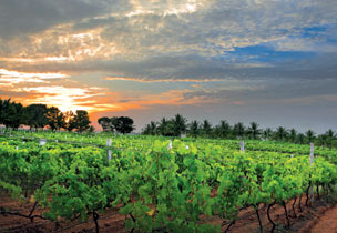 The Best Wine Holidays in India