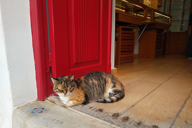 A cat snoozes at the entrance of a boutique