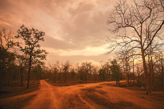 The parched pre-monsoon teak forest of Pench National Park